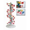 DNA結構模型