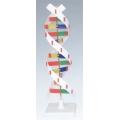 蛋白質二級DNA
