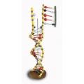 DNA結構模型(RNA模型)