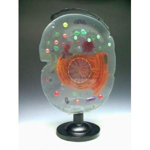 細胞顯微結構模型