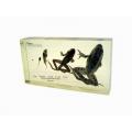 兩生類蛙的發育封膠標本