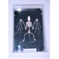 蝙蝠骨骼標本