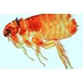 昆蟲玻片組