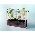 植物根莖的成長觀察器