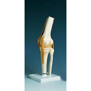 膝關節功能模型