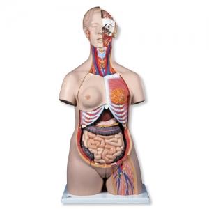 高級雙性人體模型(24分解)