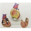 2件式心臟模型
