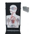 電動式心臟構造及血液循環實驗箱