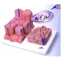 肝臟顯微模型