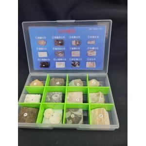 基礎化石標本A