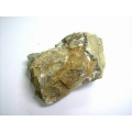 二枚貝自然化石