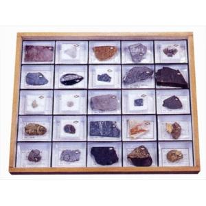 標準化石標本