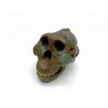 天南猿人頭骨模型