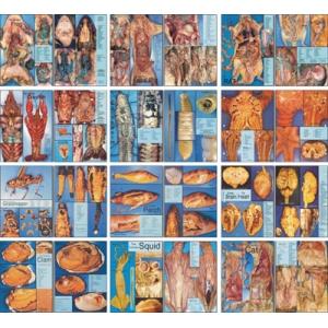 生物實體解剖圖鑑集(12幅)
