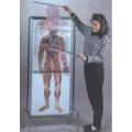 人體多層透視解剖圖