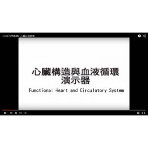 心臟血液循環